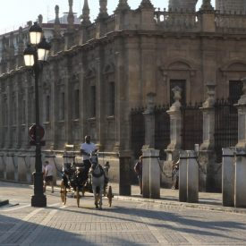 Giua Tours Sevilla-9493